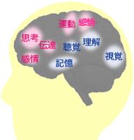 脳番地図解