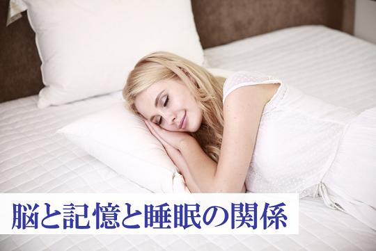 第240号 脳と記憶と睡眠の関係